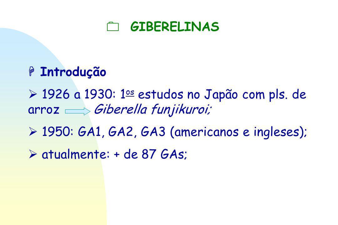  GIBERELINAS  Introdução.  1926 a 1930: 1os estudos no Japão com pls. de arroz Giberella funjikuroi;