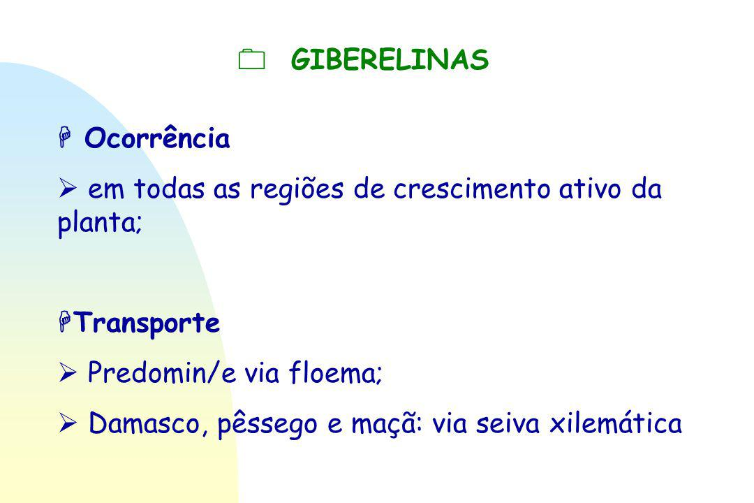  GIBERELINAS  Ocorrência.  em todas as regiões de crescimento ativo da planta; Transporte.  Predomin/e via floema;