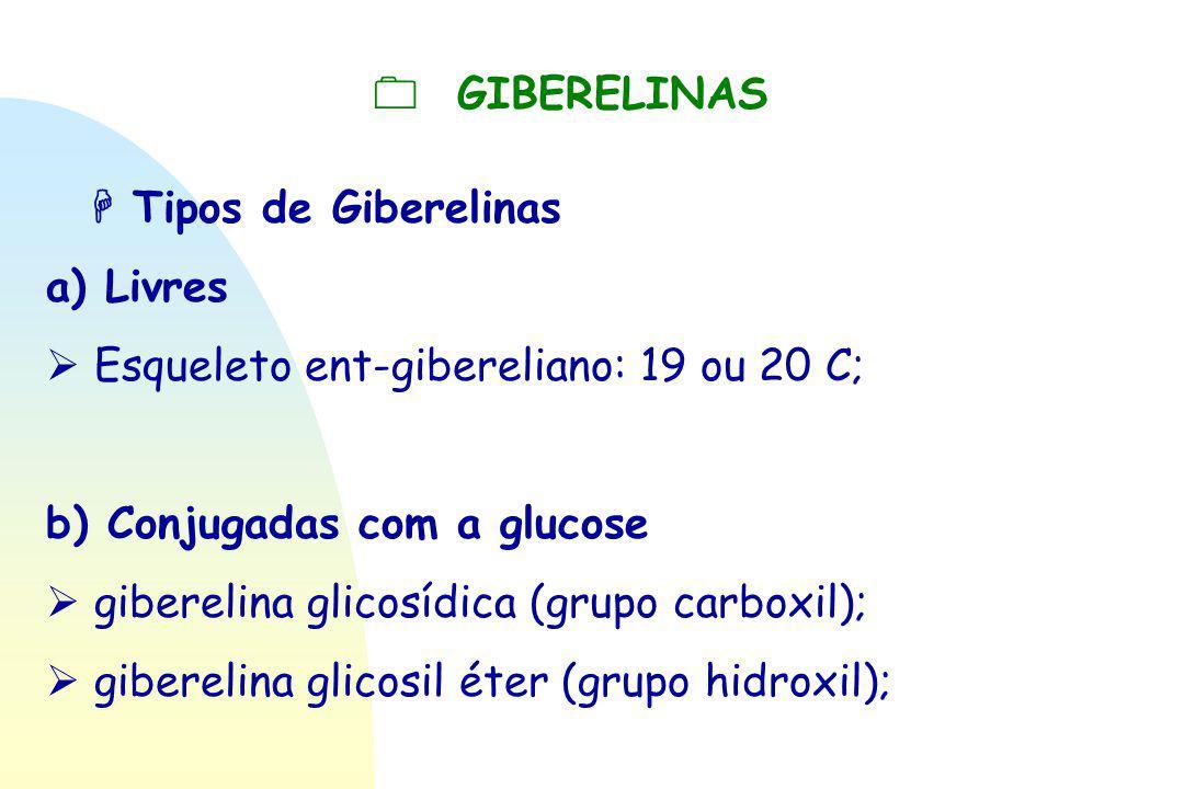  GIBERELINAS  Tipos de Giberelinas. a) Livres.  Esqueleto ent-gibereliano: 19 ou 20 C; b) Conjugadas com a glucose.