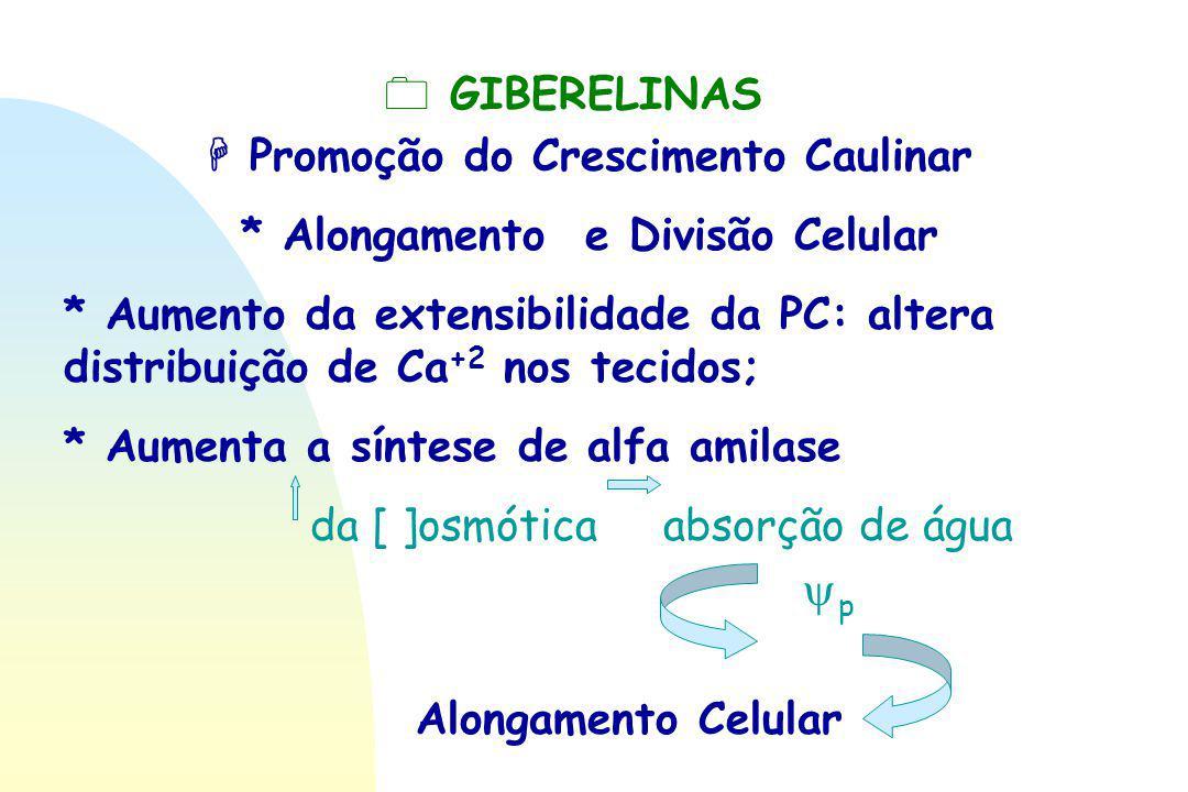  Promoção do Crescimento Caulinar * Alongamento e Divisão Celular