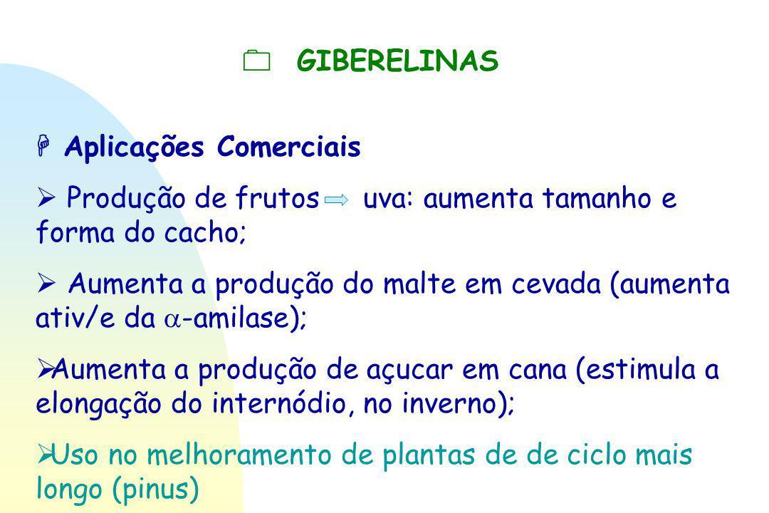  GIBERELINAS  Aplicações Comerciais.  Produção de frutos uva: aumenta tamanho e forma do cacho;