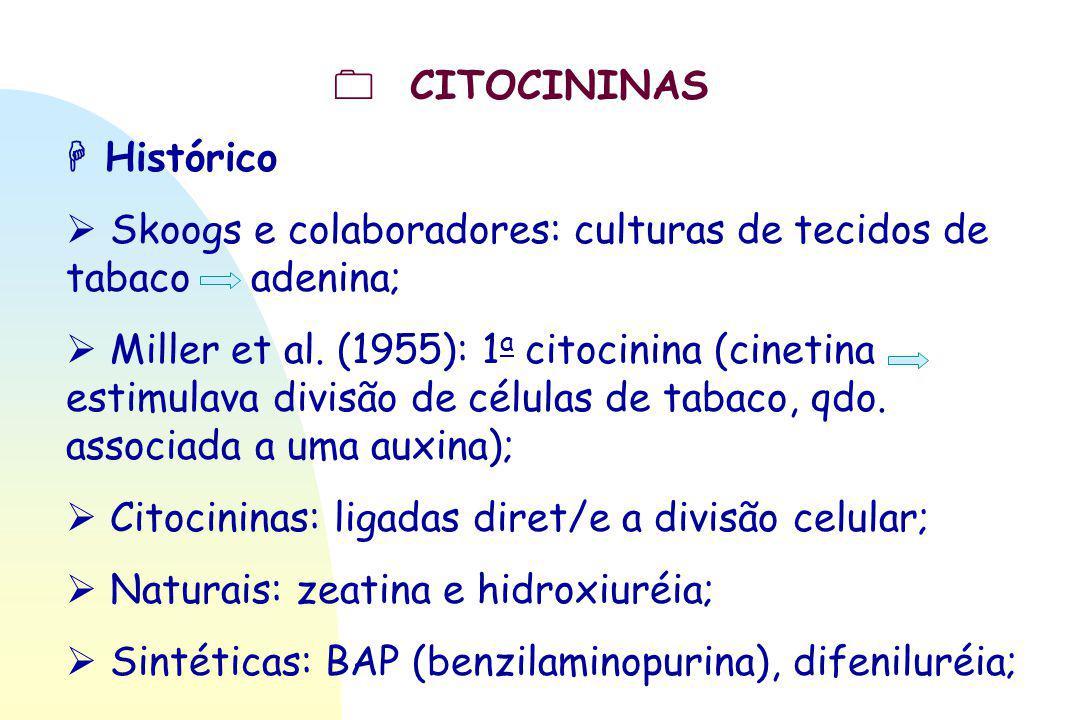  CITOCININAS  Histórico.  Skoogs e colaboradores: culturas de tecidos de tabaco adenina;