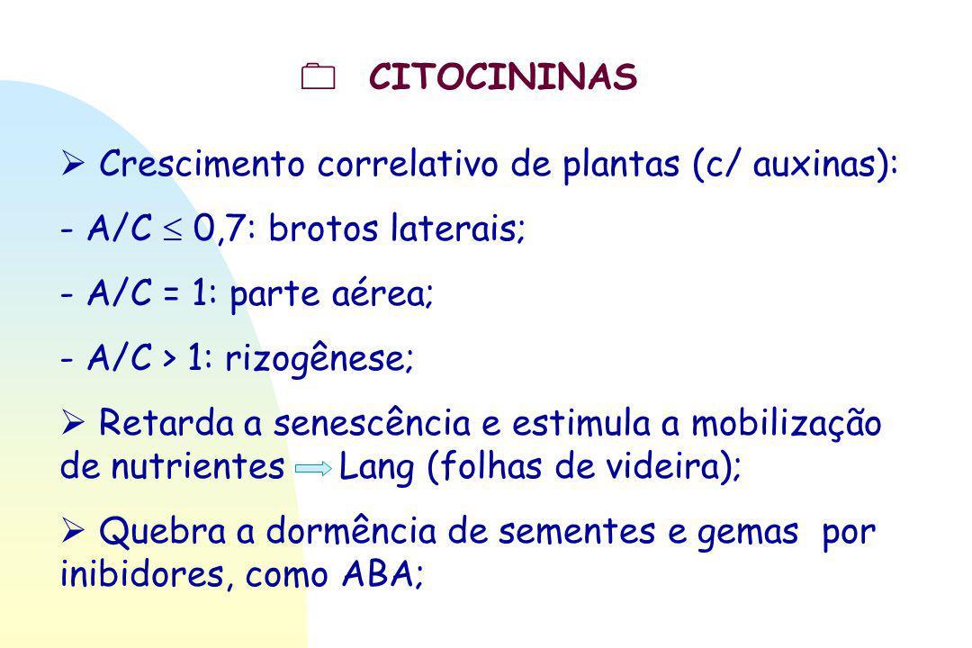  CITOCININAS  Crescimento correlativo de plantas (c/ auxinas): - A/C  0,7: brotos laterais; - A/C = 1: parte aérea;