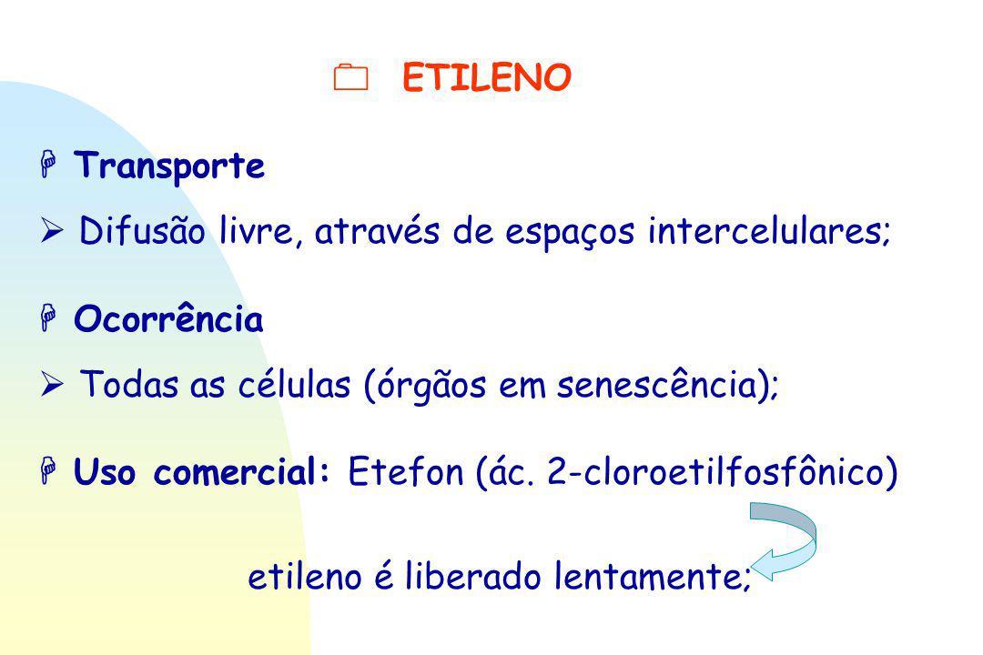 etileno é liberado lentamente;