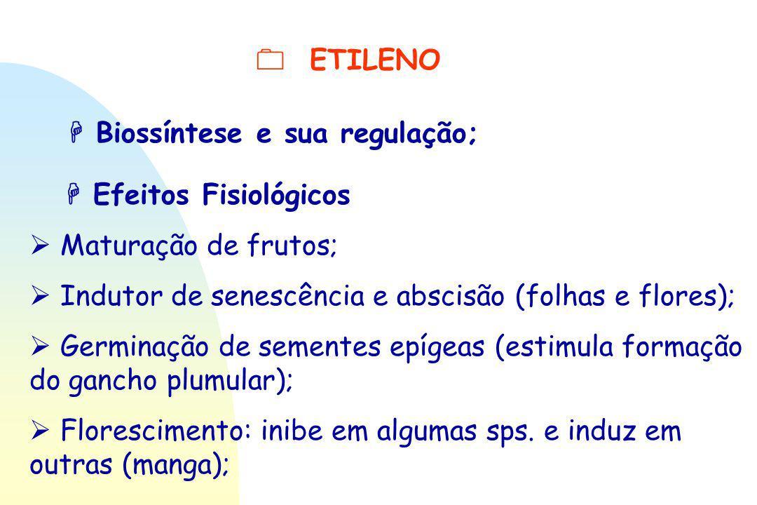  ETILENO  Biossíntese e sua regulação;  Efeitos Fisiológicos.  Maturação de frutos;  Indutor de senescência e abscisão (folhas e flores);