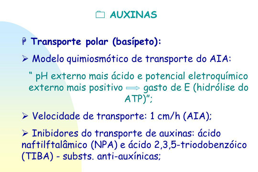  AUXINAS  Transporte polar (basípeto):  Modelo quimiosmótico de transporte do AIA: