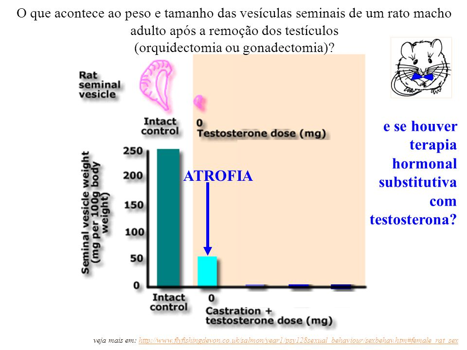 (orquidectomia ou gonadectomia)
