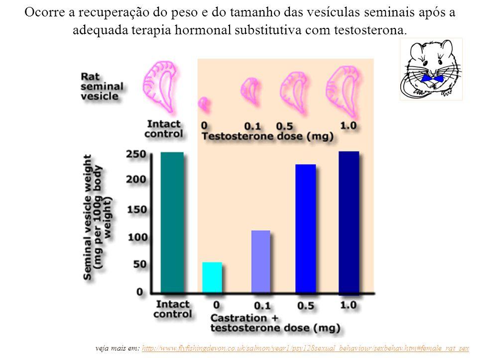 Ocorre a recuperação do peso e do tamanho das vesículas seminais após a adequada terapia hormonal substitutiva com testosterona.