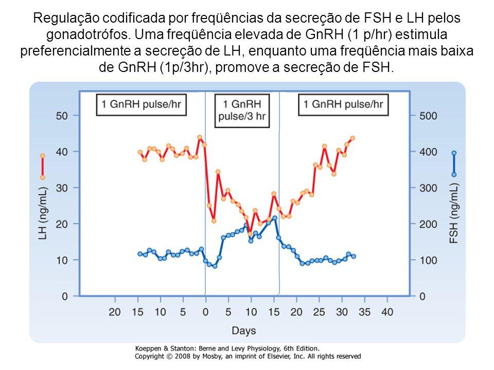 Regulação codificada por freqüências da secreção de FSH e LH pelos gonadotrófos.