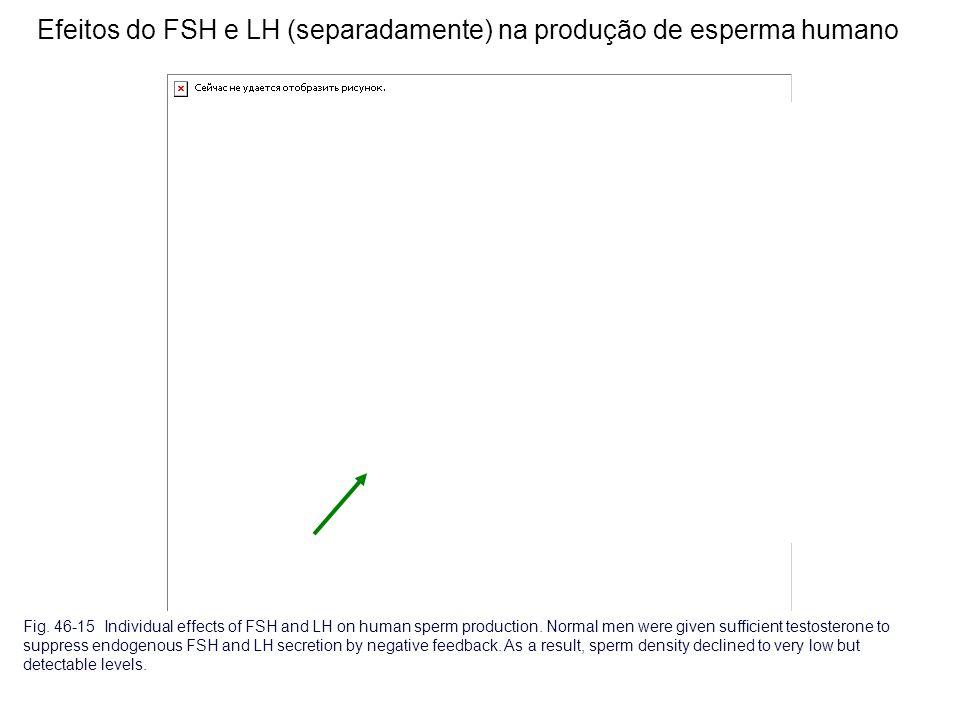Efeitos do FSH e LH (separadamente) na produção de esperma humano