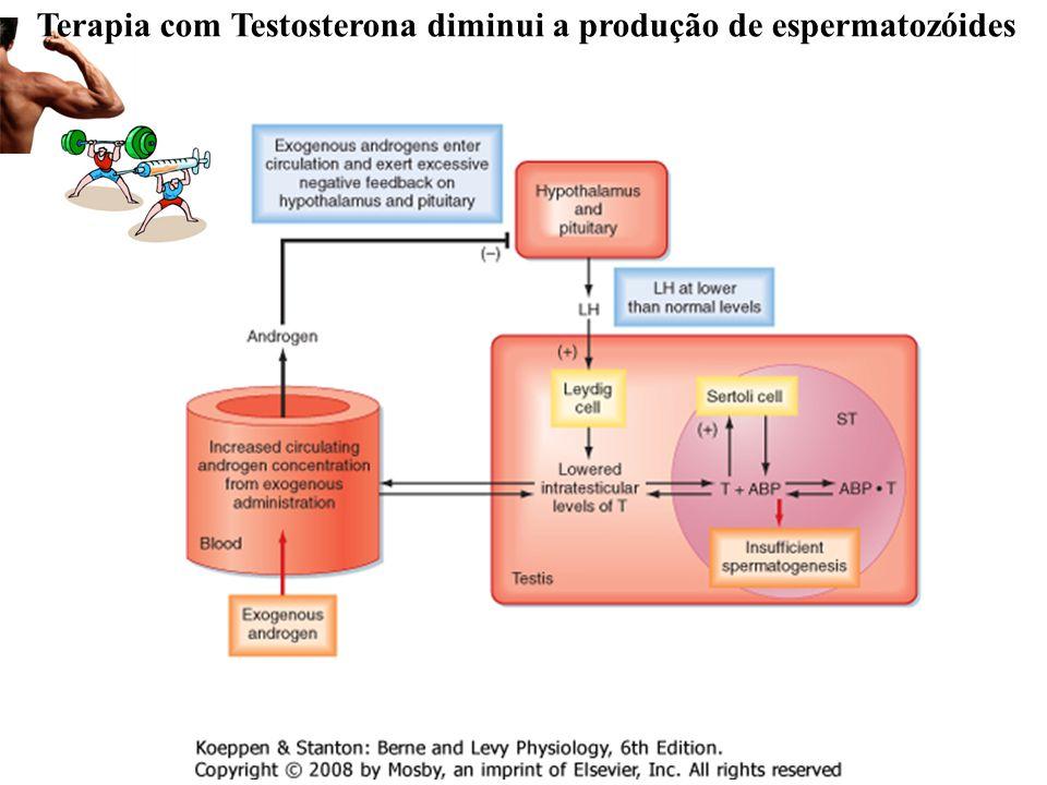 Terapia com Testosterona diminui a produção de espermatozóides