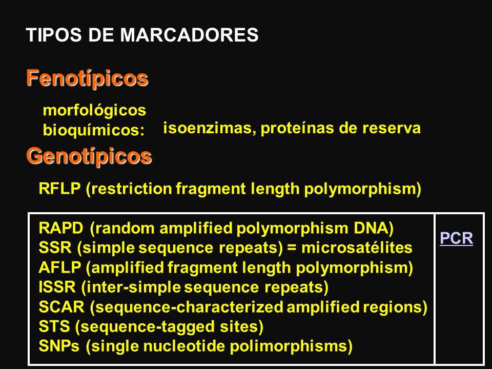Fenotípicos Genotípicos TIPOS DE MARCADORES morfológicos bioquímicos: