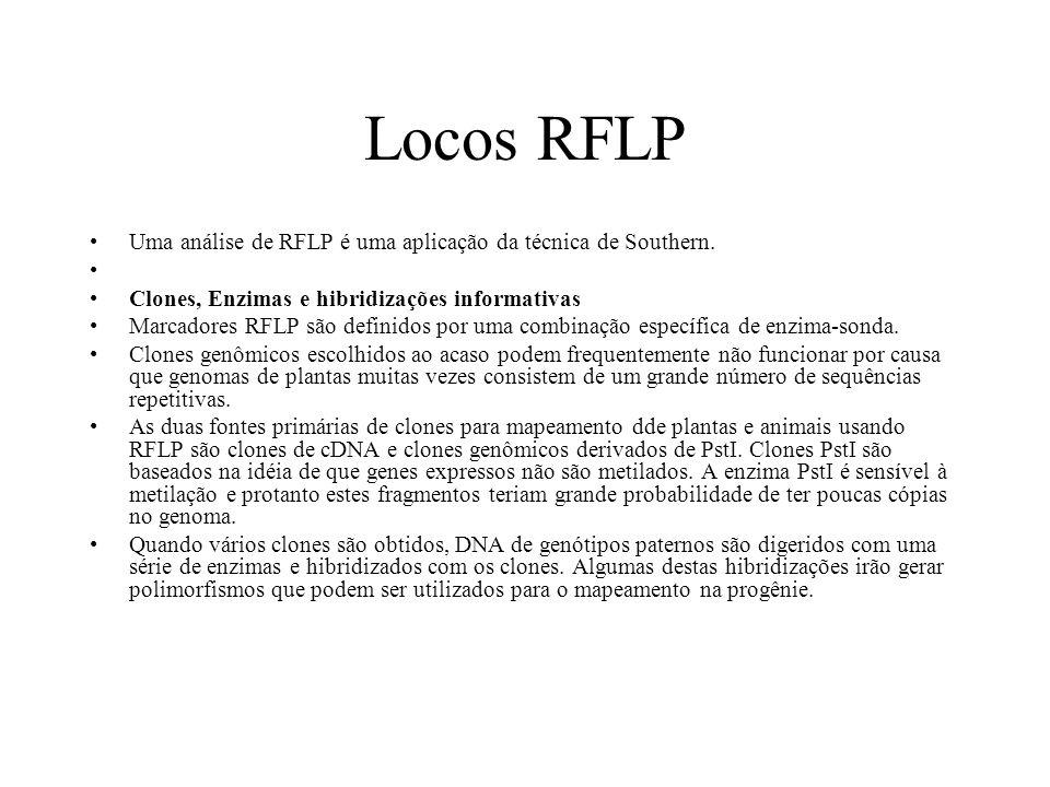 Locos RFLP Uma análise de RFLP é uma aplicação da técnica de Southern.