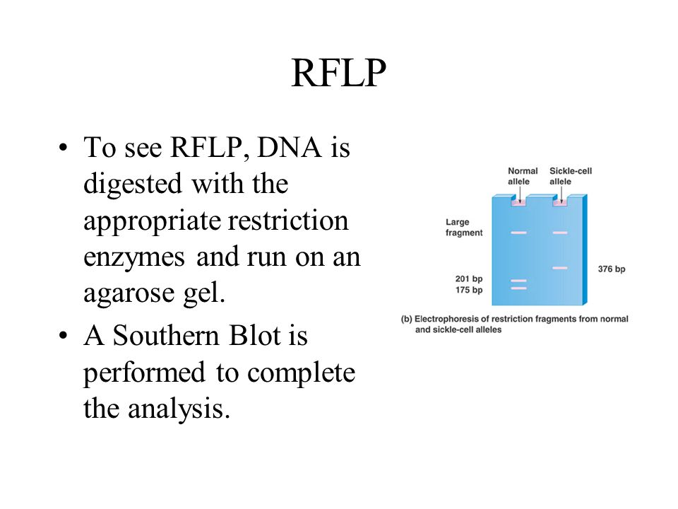 RFLP To see RFLP, DNA is digested with the appropriate restriction enzymes and run on an agarose gel.