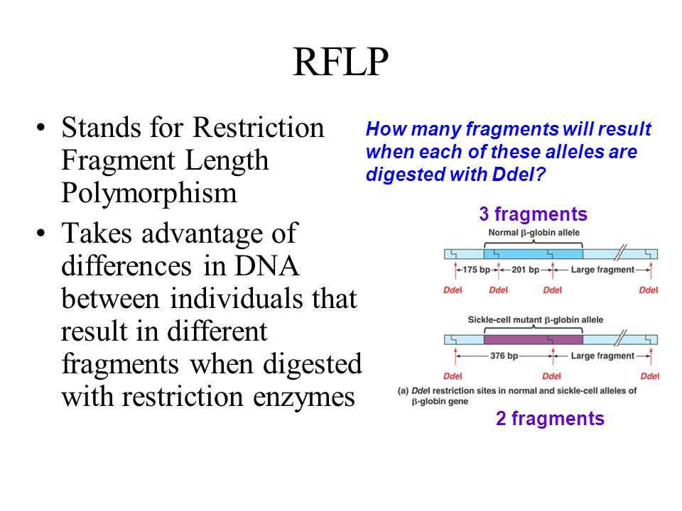 RFLP Stands for Restriction Fragment Length Polymorphism