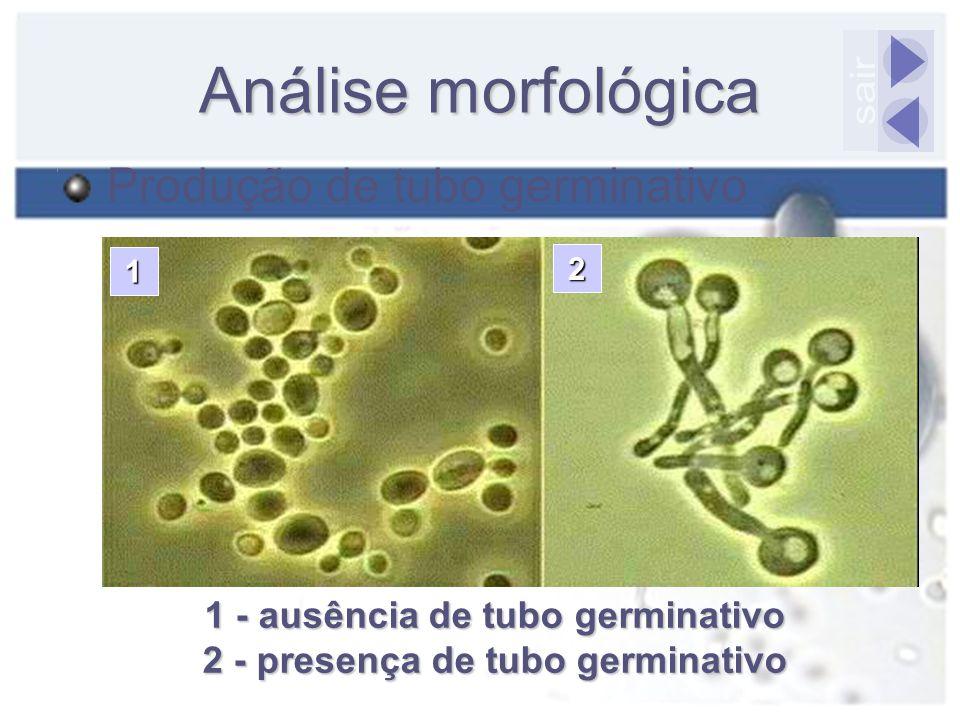 1 - ausência de tubo germinativo 2 - presença de tubo germinativo