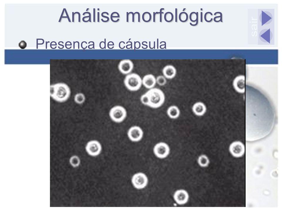 Análise morfológica sair Presença de cápsula