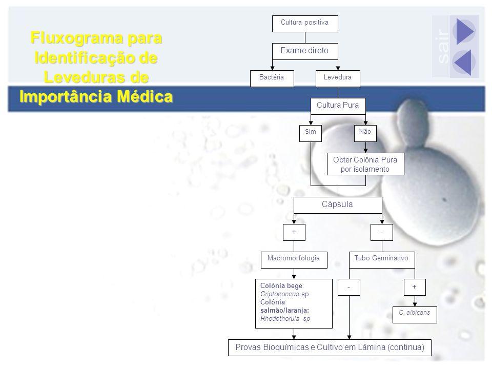 Fluxograma para Identificação de Leveduras de Importância Médica