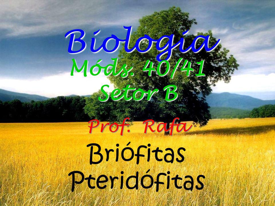 Biologia Móds. 40/41 Setor B Prof. Rafa Briófitas Pteridófitas