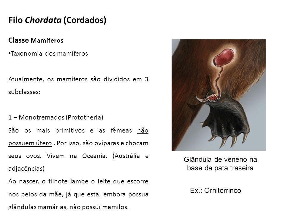 Glândula de veneno na base da pata traseira