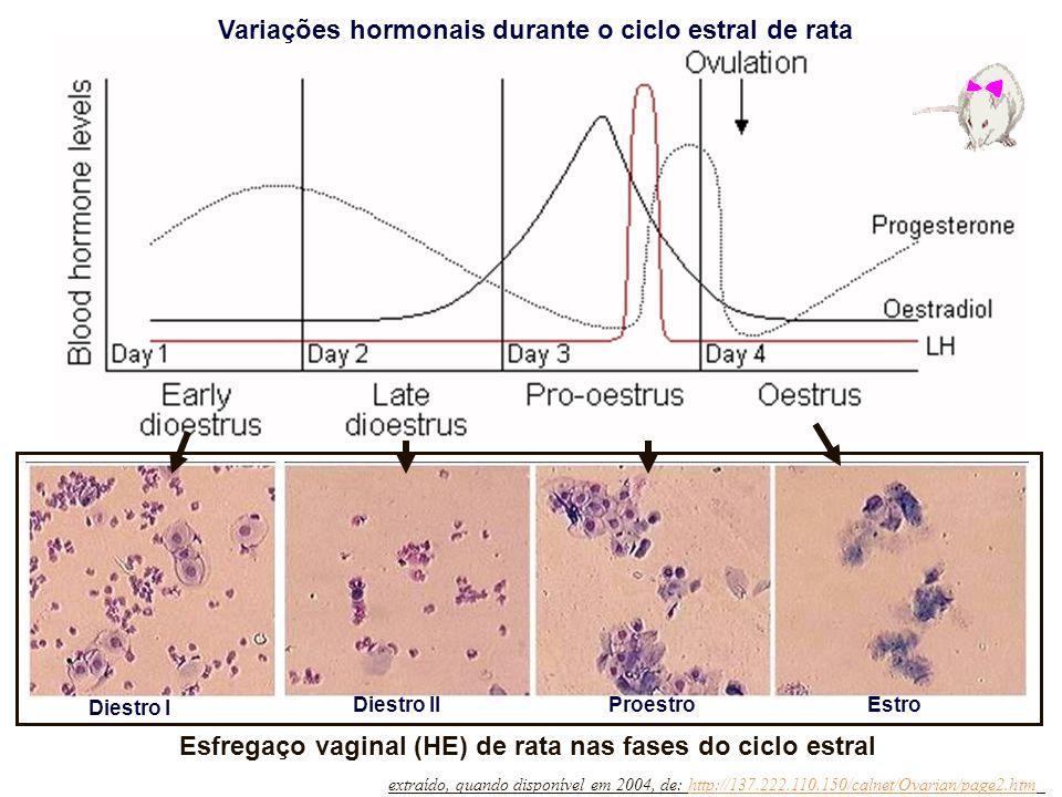 Esfregaço vaginal (HE) de rata nas fases do ciclo estral