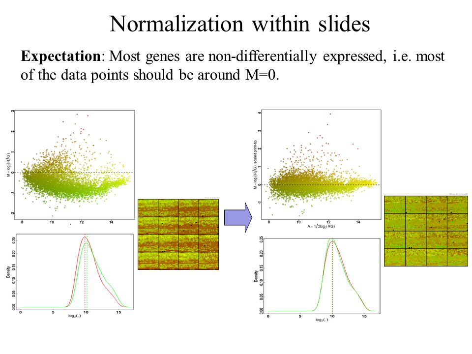 Normalization within slides