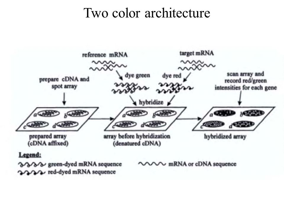 Two color architecture