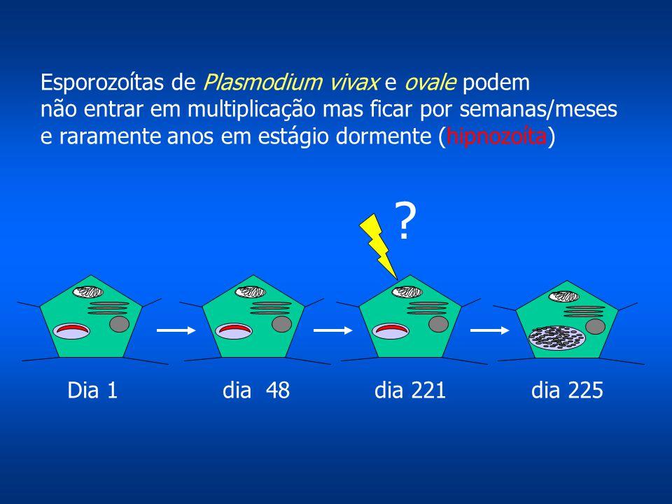 Esporozoítas de Plasmodium vivax e ovale podem
