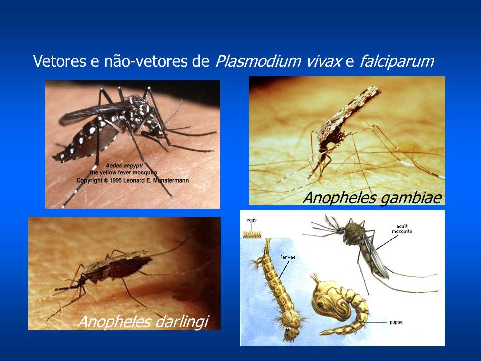 Vetores e não-vetores de Plasmodium vivax e falciparum