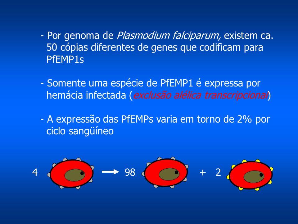 - Por genoma de Plasmodium falciparum, existem ca.