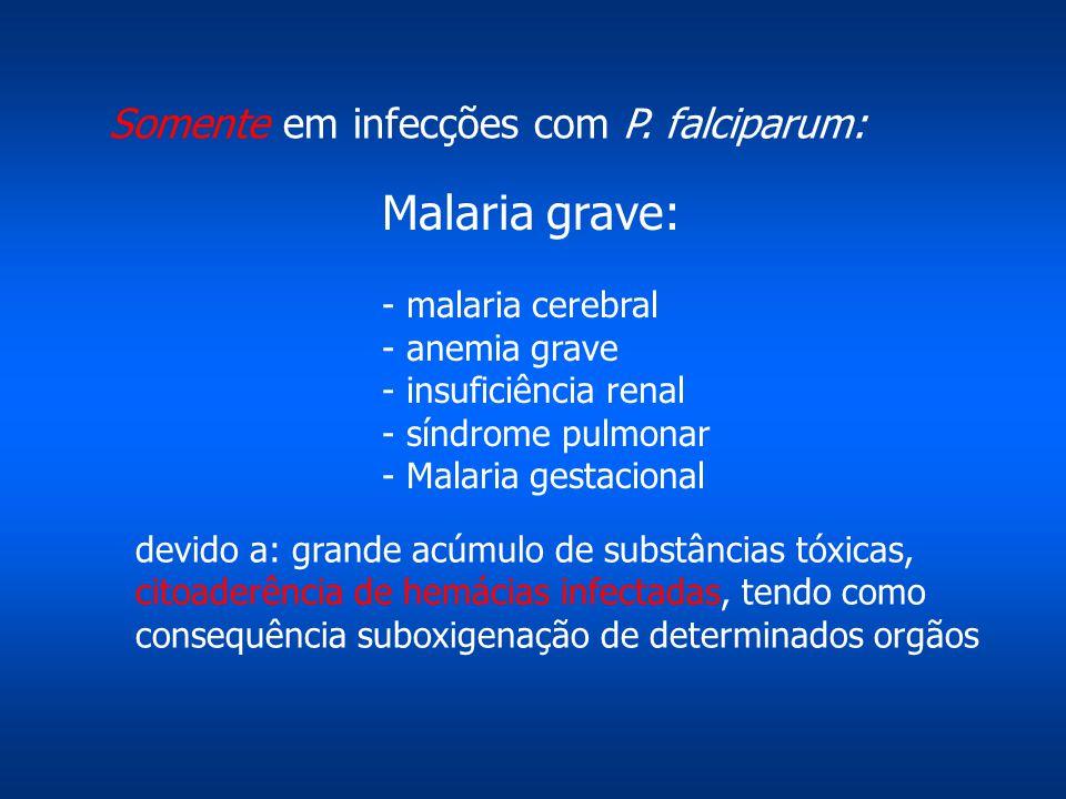 Malaria grave: Somente em infecções com P. falciparum: