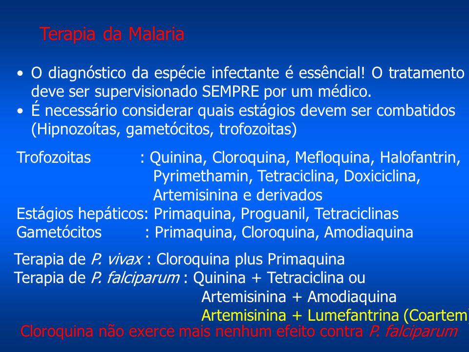 Terapia da Malaria O diagnóstico da espécie infectante é essêncial! O tratamento deve ser supervisionado SEMPRE por um médico.