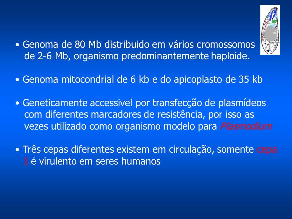 Genoma de 80 Mb distribuido em vários cromossomos