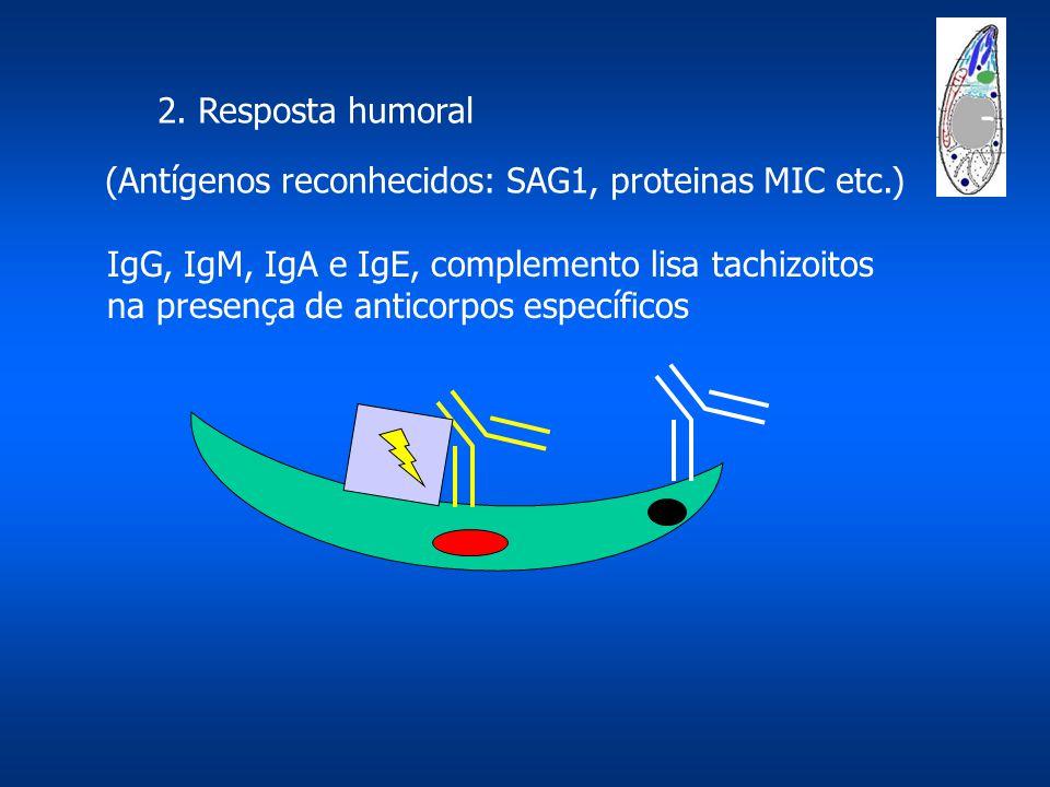 2. Resposta humoral (Antígenos reconhecidos: SAG1, proteinas MIC etc.) IgG, IgM, IgA e IgE, complemento lisa tachizoitos.