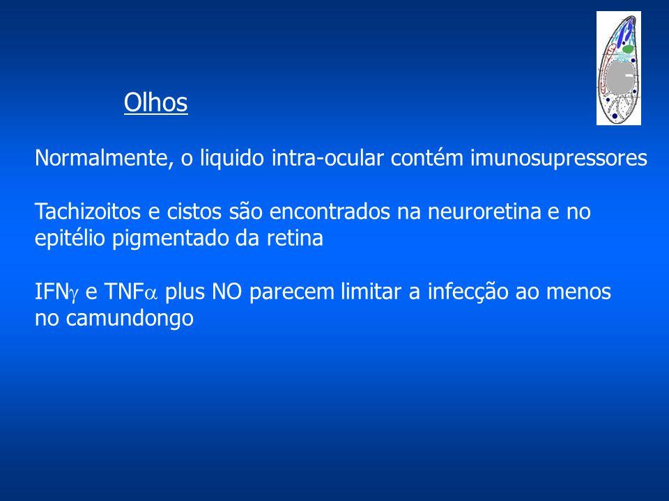 Olhos Normalmente, o liquido intra-ocular contém imunosupressores
