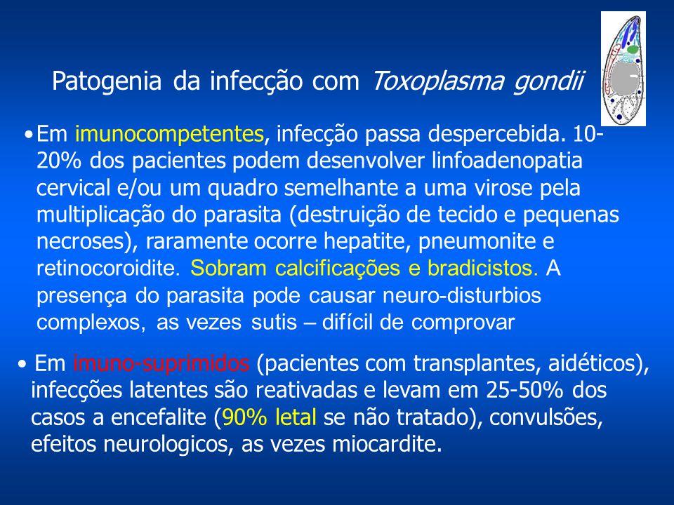 Patogenia da infecção com Toxoplasma gondii