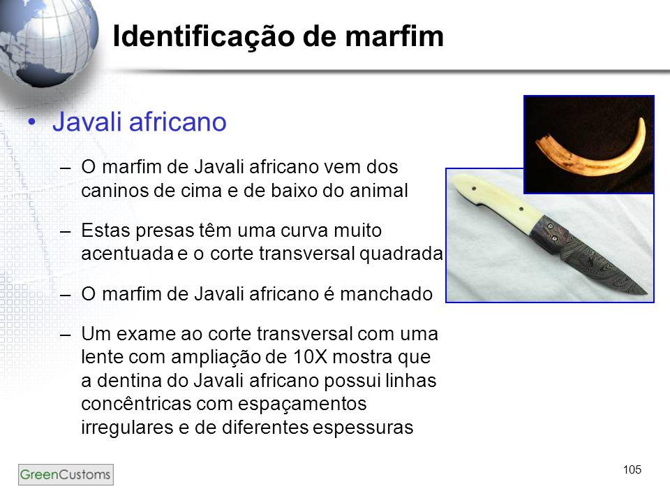 Identificação de marfim