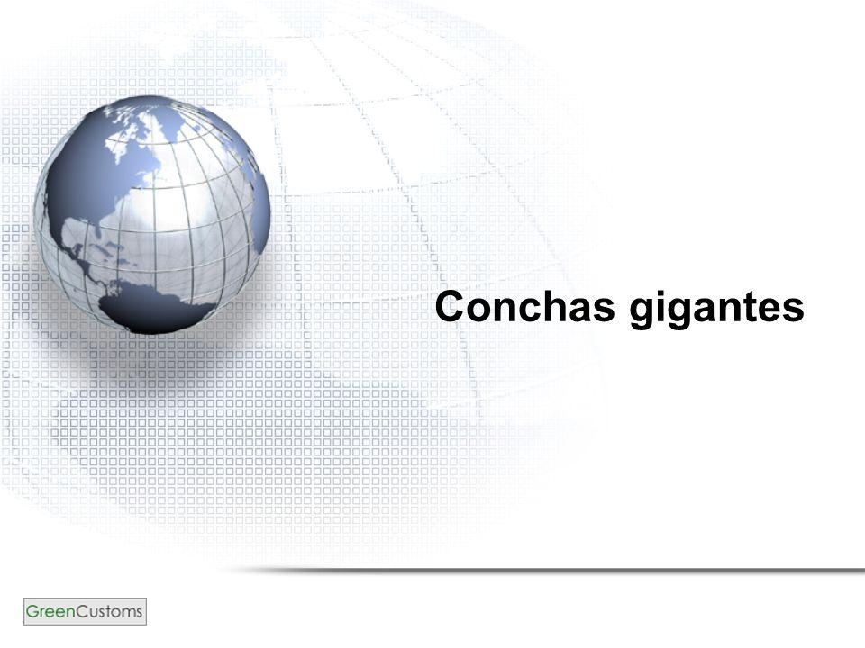 Conchas gigantes