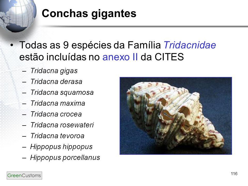 Conchas gigantes Todas as 9 espécies da Família Tridacnidae estão incluídas no anexo II da CITES. Tridacna gigas.