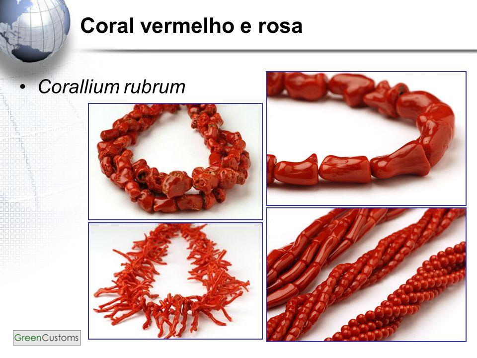 Coral vermelho e rosa Corallium rubrum