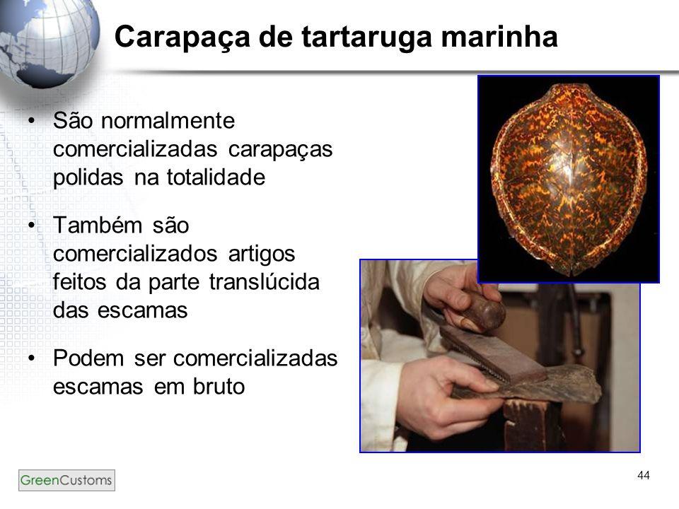 Carapaça de tartaruga marinha