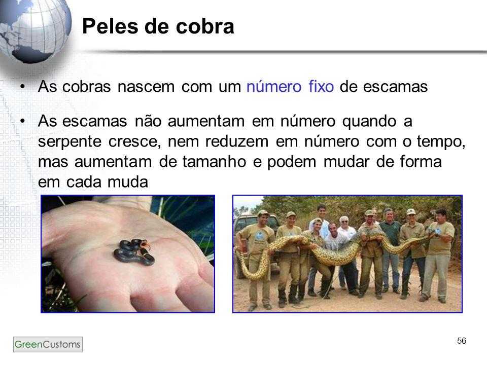 Peles de cobra As cobras nascem com um número fixo de escamas