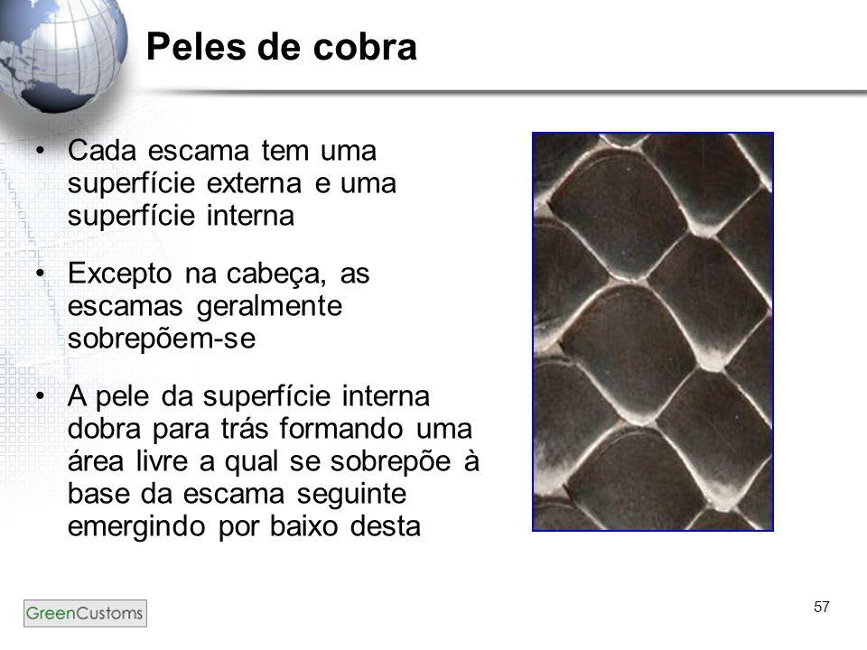 Peles de cobra Cada escama tem uma superfície externa e uma superfície interna. Excepto na cabeça, as escamas geralmente sobrepõem-se.