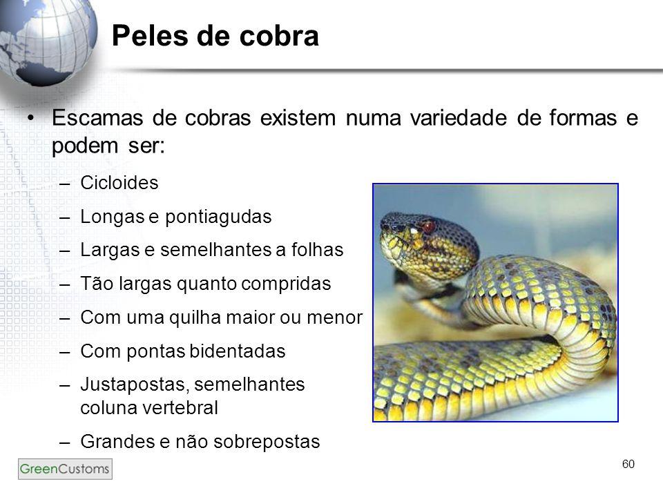 Peles de cobra Escamas de cobras existem numa variedade de formas e podem ser: Cicloides. Longas e pontiagudas.