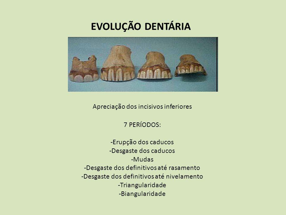 EVOLUÇÃO DENTÁRIA Apreciação dos incisivos inferiores 7 PERÍODOS: