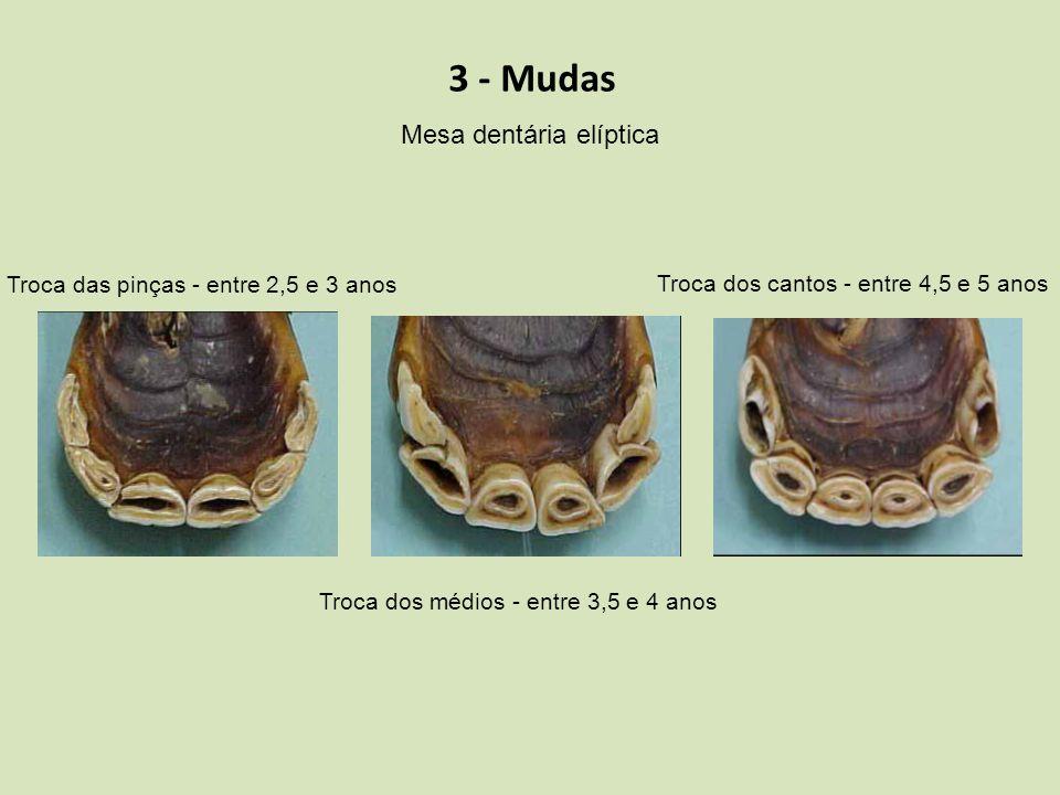 Mesa dentária elíptica