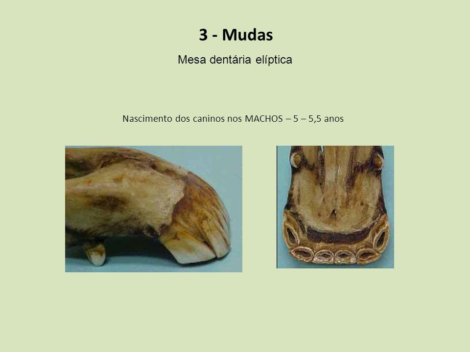 3 - Mudas Mesa dentária elíptica