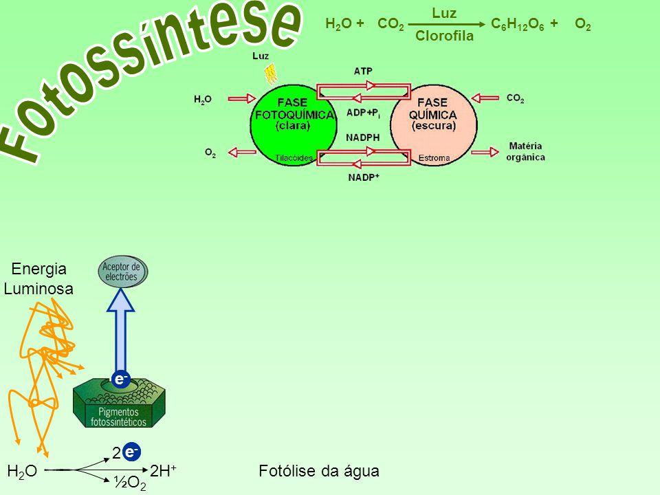 Fotossíntese Energia Luminosa e- e- e- 2 e- e- H2O 2H+