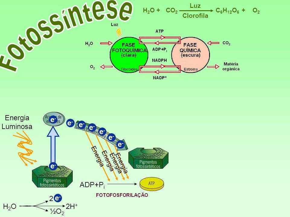 Fotossíntese Energia Luminosa e- e- e- e- e- e- e- e- e- ADP+Pi 2 e-