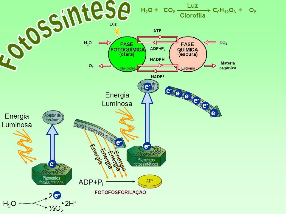 Fotossíntese e- e- Energia Luminosa e- e- e- e- Energia Luminosa e- e-